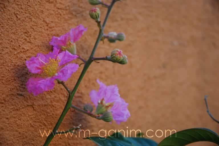 פרחים ופריחה