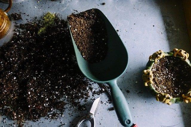 טיפים והנחיות לטיפול מקצועי בגינה